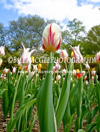 Sherwood Gardens - 10 Apr 2010