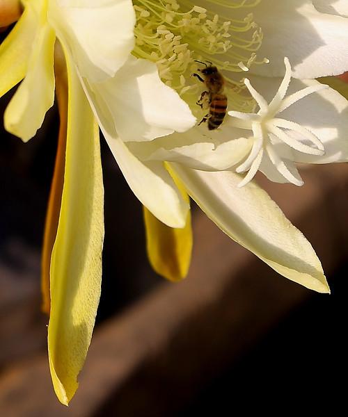 mayflowers012