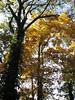 Autumn, October 25th.