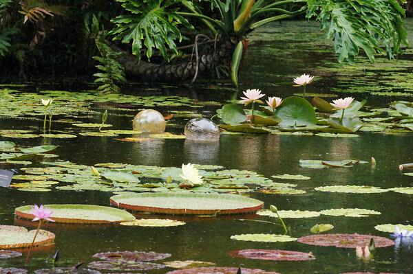 mckee botanical gardens 7 14 2013