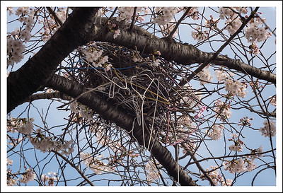This is a crow's nest.  They love to steal clothes hangers for their nests.  They have stolen some from our line too.  It must make the nest more stable.
