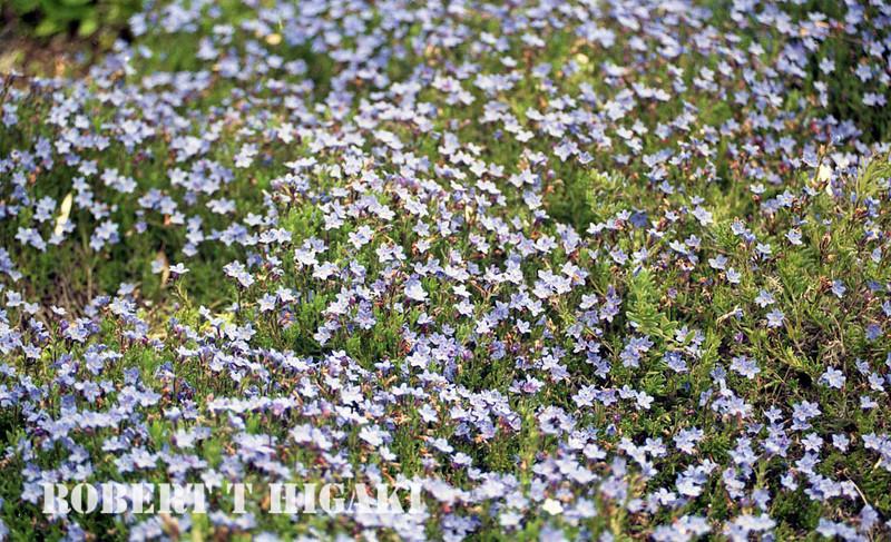 mendocino botanical gardens-10