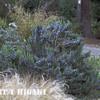 mendocino botanical gardens-8