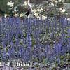 mendocino botanical gardens-2