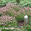 mendocino botanical gardens-17