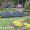 mendocino botanical gardens-1
