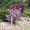 mendocino botanical gardens-16