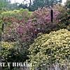 mendocino botanical gardens-7