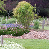mendocino botanical gardens-13
