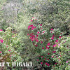 mendocino botanical gardens-5