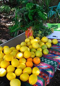 Meyers lemons
