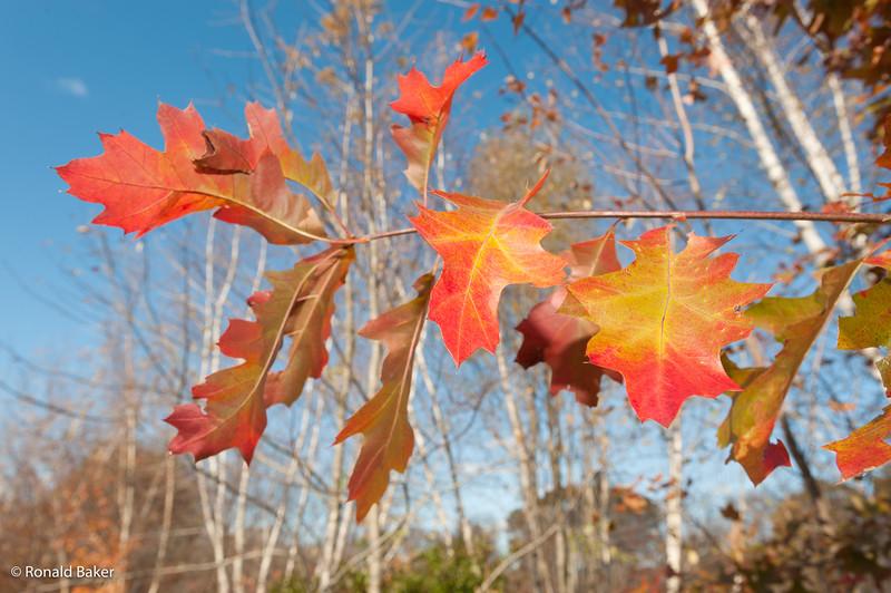 2011-11-04-Whitman Weekend -Joey-112