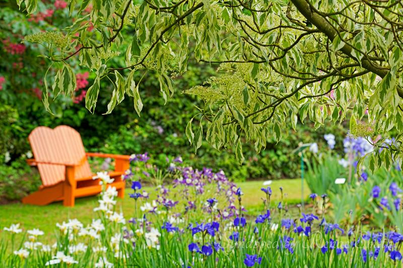 The Dreaming Garden