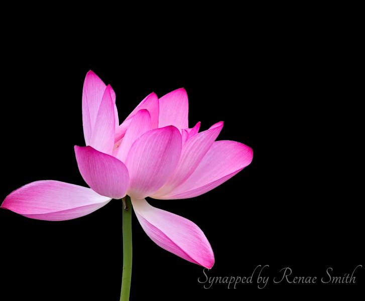 Nectar del Elegance