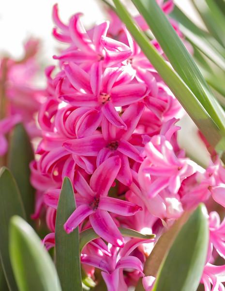 Blushed Pink