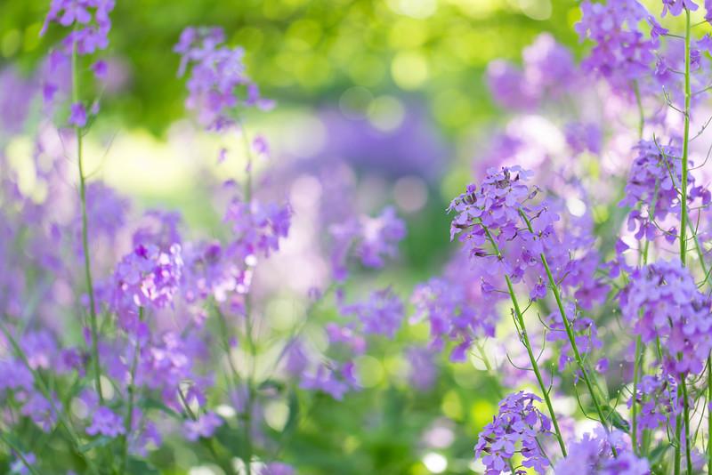 Lavender Entrance