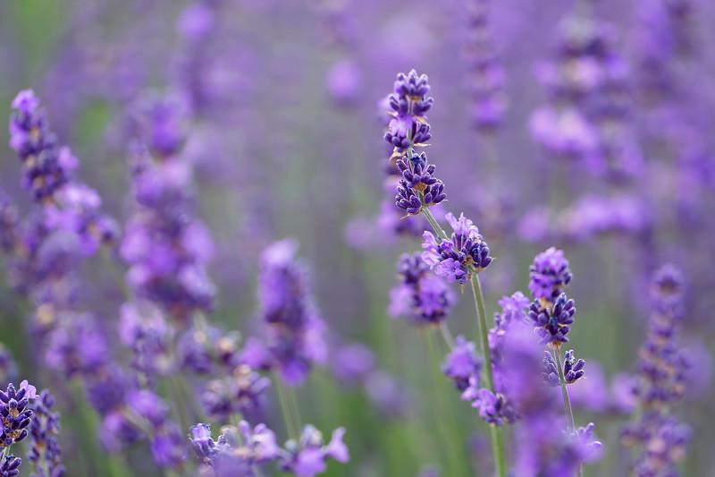 A Drop of Purple Rain