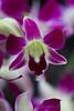 Celestial Purple