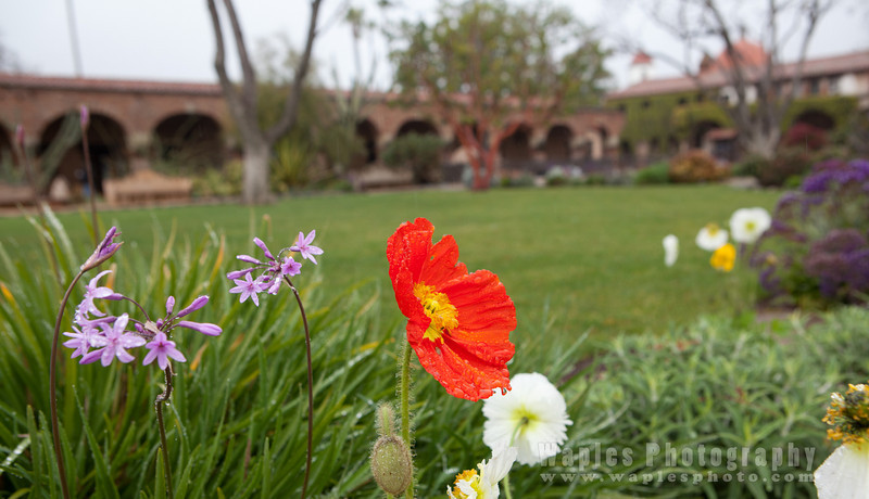Garlic, Poppies, and Mission