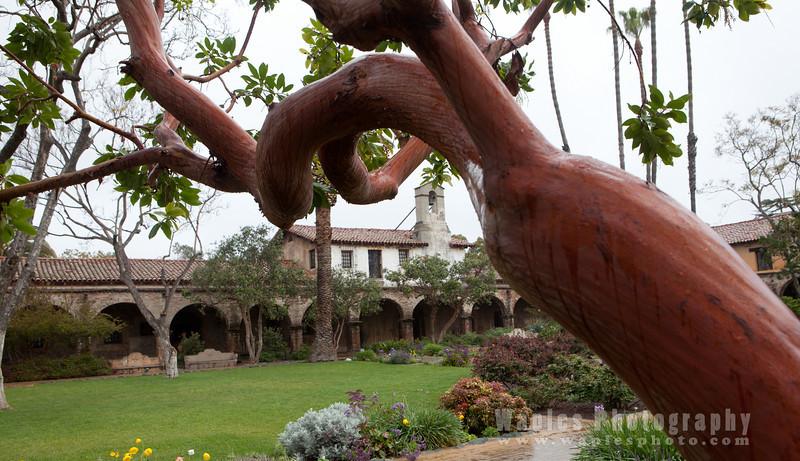 Manzanita Tree and Mission