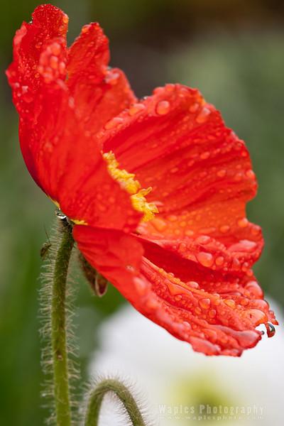 Poppy and Bug