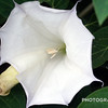 Soul Expansion - 2013 Soul Expansion - 2013, moonflower, personal photo project