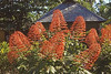 Pagoda Flowers