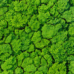 Tree Tops over Kauai.  Looking down on the trees captured from the Helicopter doing aerial photography in Kauai, Hawaii