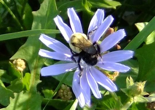 A bzzzzzzzy bee.