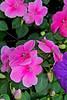 DSC_6106