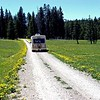 Johnny Gulch Road in the Gravelly Range Mountains, lined with dandelions.  Elevation 7000 feet.