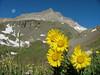 Full Moon over Gilpin Peak and Alpine Sunflowers