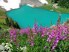 why they call it Blue Lakes<br /> fireweed, Mount Sneffels Wilderness