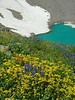 lupine, paintbrush and arnica, Blue Lakes, Mount Sneffels Wilderness