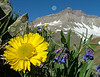 Full Moon over Gilpin Peak, Alpine Sunflowers and Chiming Bells