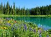 lupine, bistort, sneezeweed and paintbrush, Blue Lakes, Mount Sneffels Wilderness