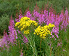 Fireweed and Groundsel on Vail Pass