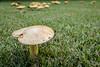 161005-Mushrooms-009