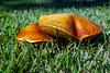 161005-Mushrooms-024