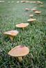 161005-Mushrooms-012