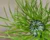 How I LOVE love in a mist!