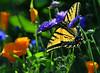 Backlit Butterfly