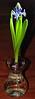 a hyacinth vase