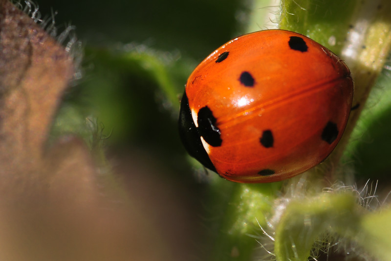 January Ladybug in the Outdoor Garden!