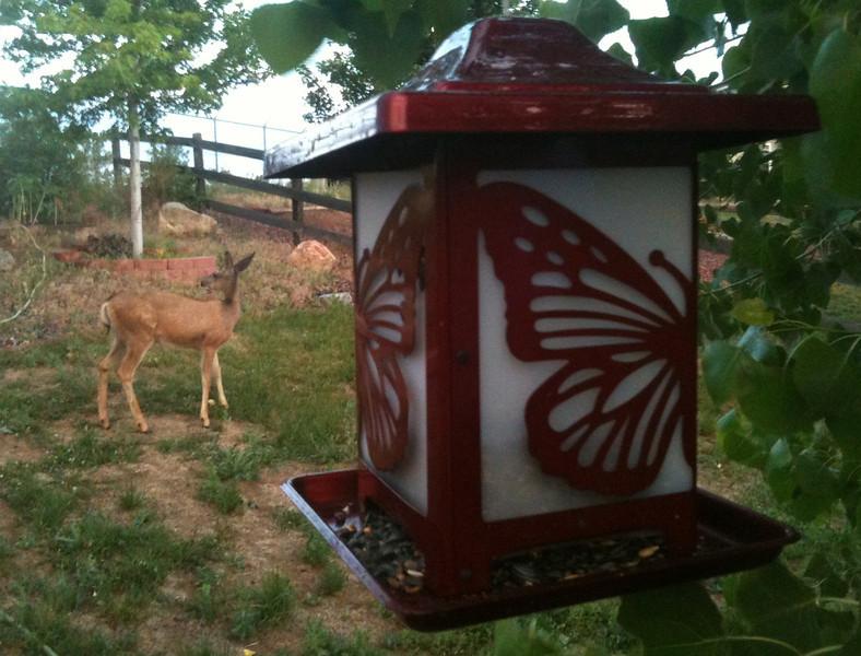 visitor in my backyard