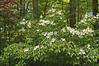 sis garden 6-11-06 038a