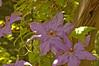 sis garden 6-11-06 027a