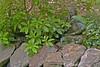 sis garden 6-11-06 025a