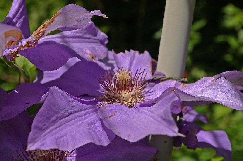sis garden 6-11-06 028a