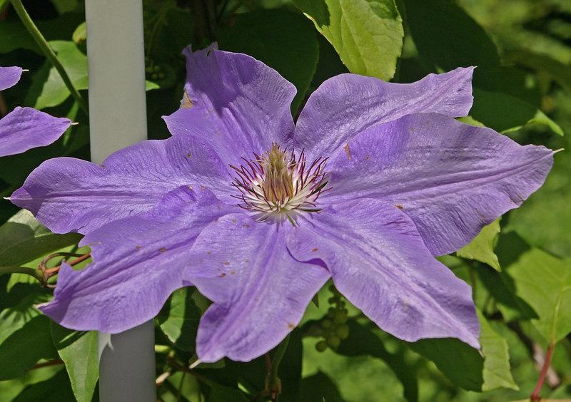 sis garden 6-11-06 029a